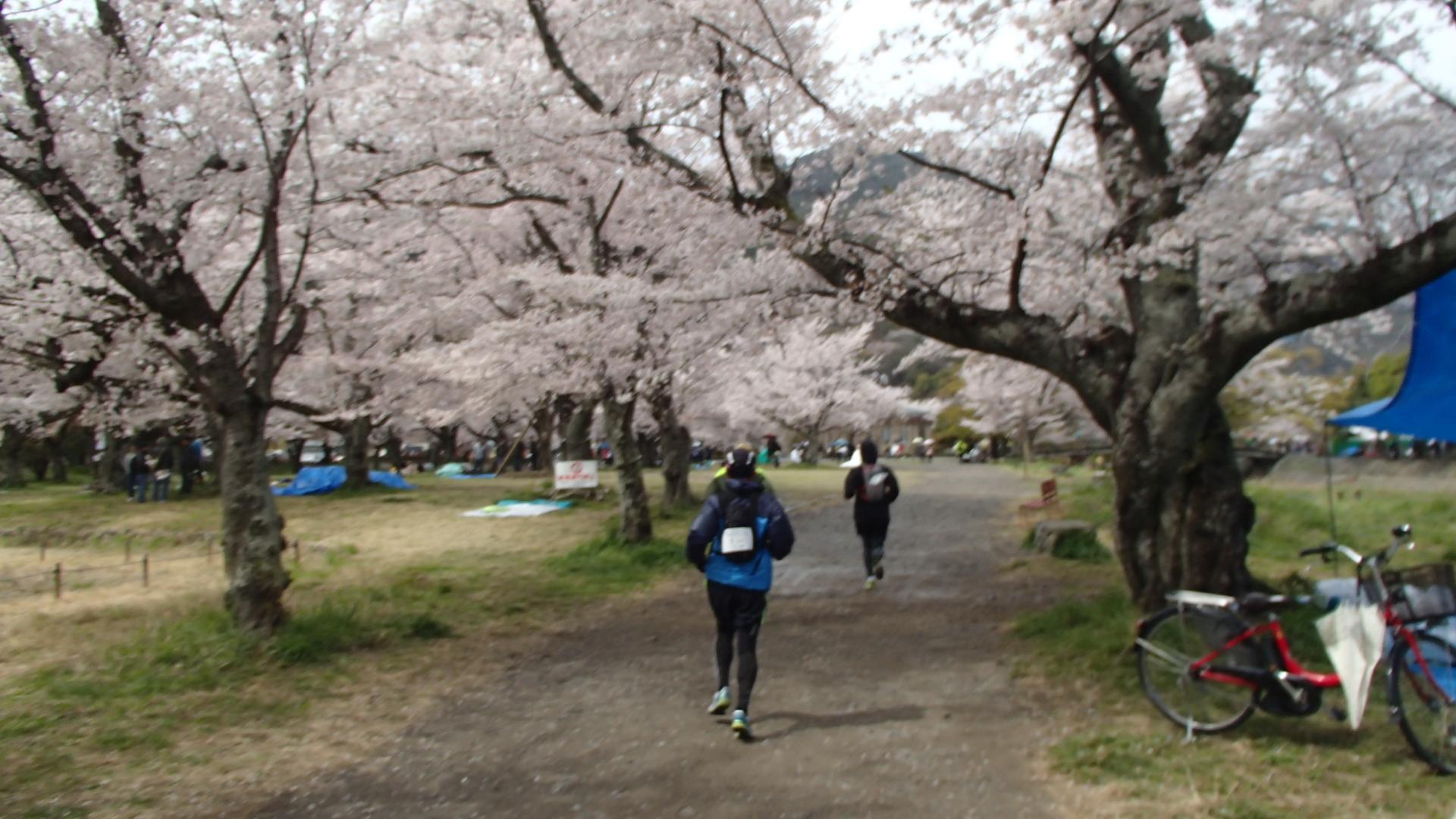 やんちゃ村マラニック「桜めぐり」2014