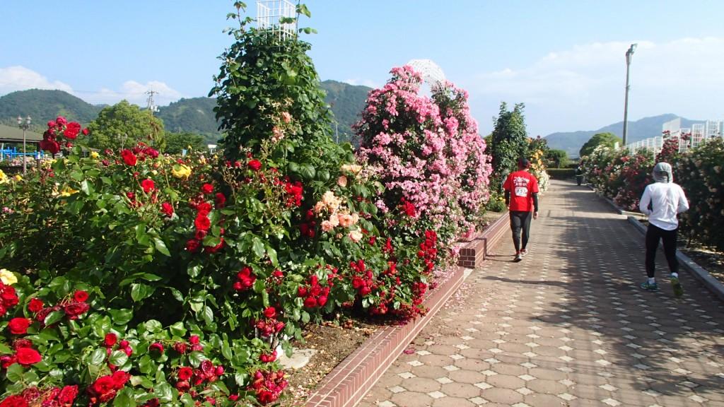 吉海町バラ公園
