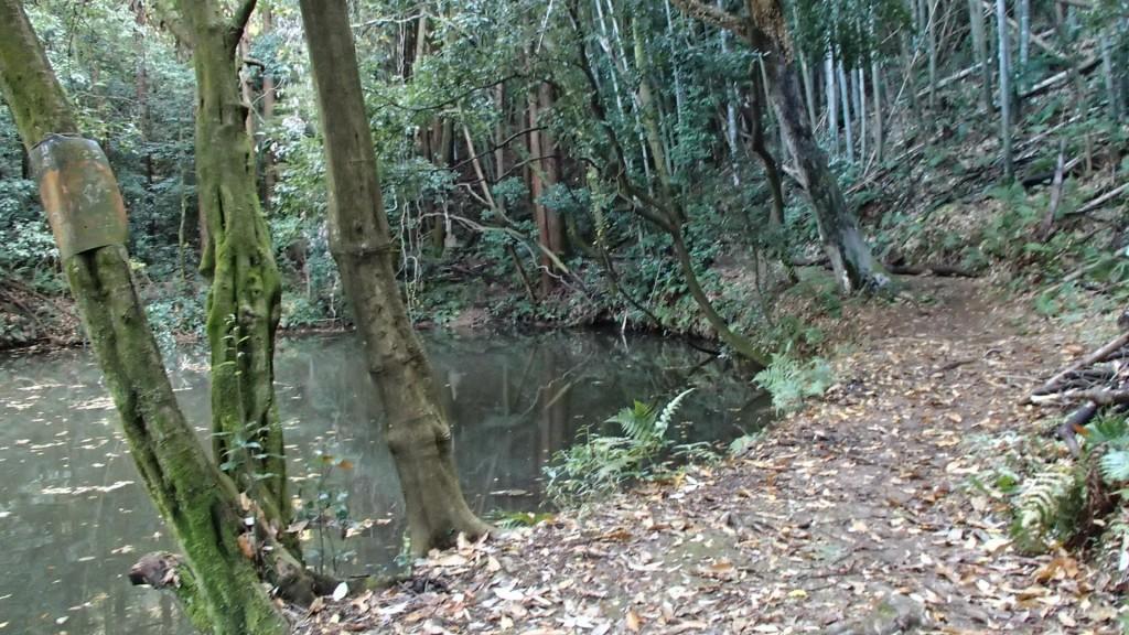 大岩神社手前の池