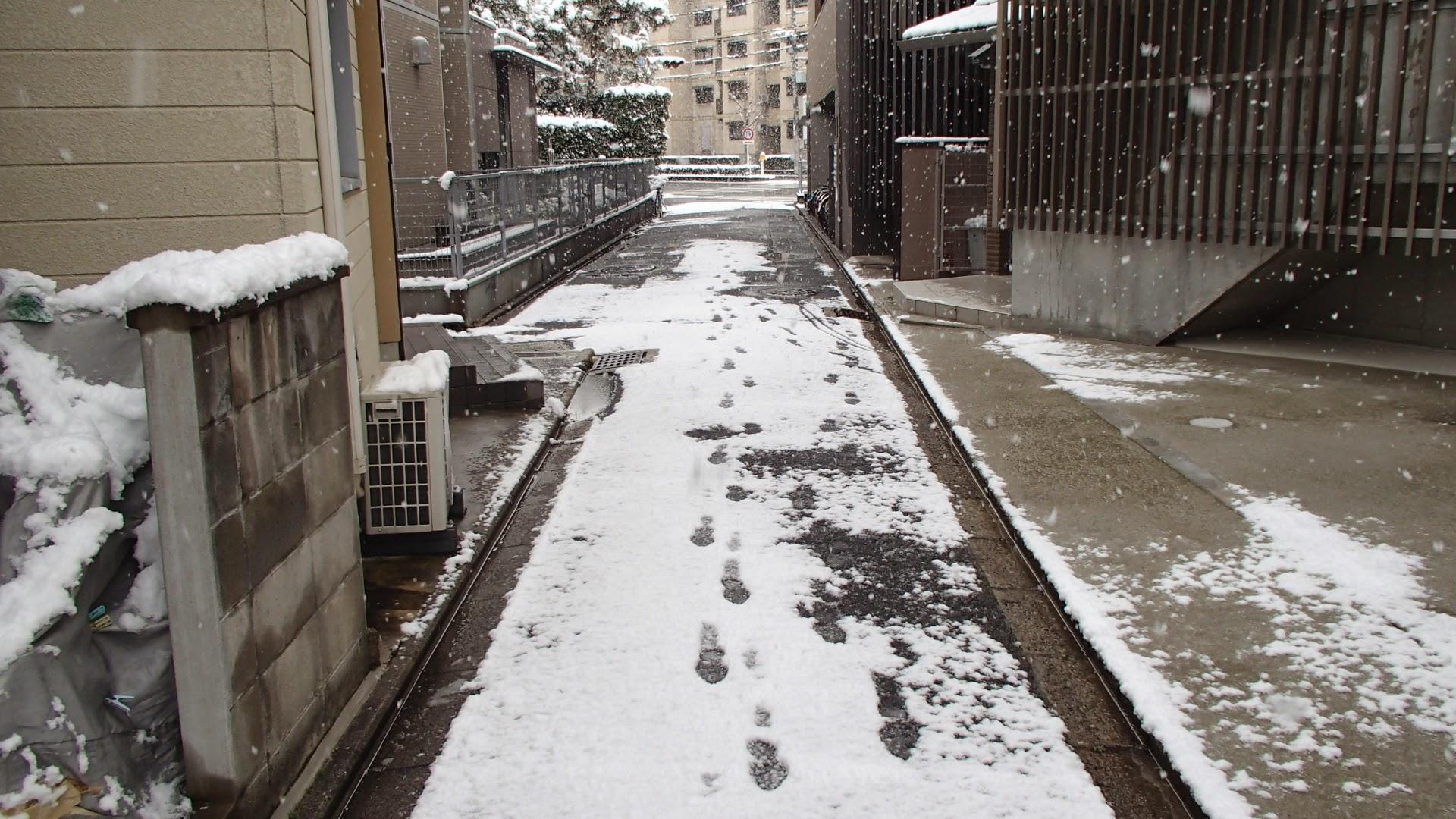 2015年2月1日朝雪
