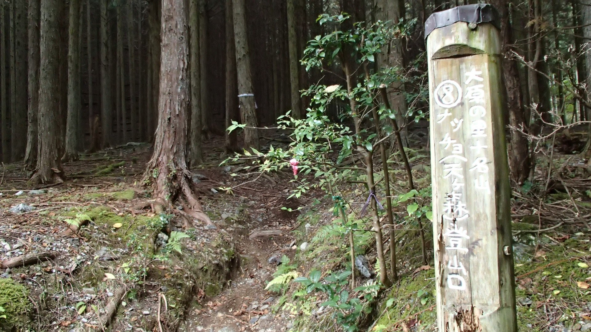 小出石からナッチョへの登山口